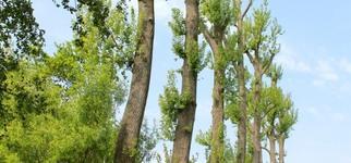 Tuinen Brughmans - Snoeien en vellen van bomen